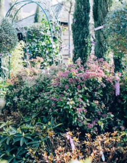 jardin-des-oliviers