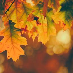 sélection-automne
